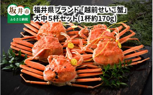 [G-1401] 福井県ブランド 「越前セイコ蟹」 大中5杯セット