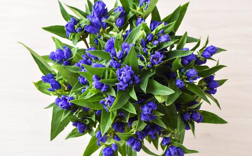 発色が鮮やかで 花持ちが長いのが特徴