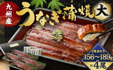 FY12-19 九州産うなぎ蒲焼大4尾(1尾あたり156~189g)