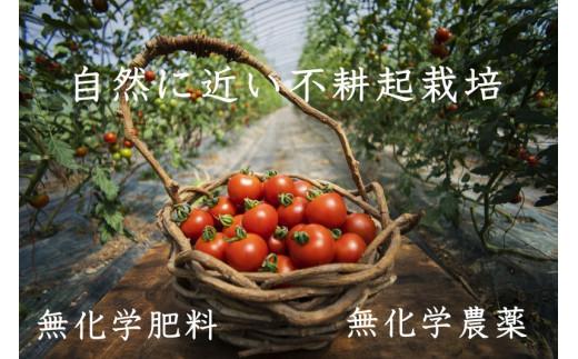 のんの畑北海道ミディトマト3.5kg(2020年発送分)