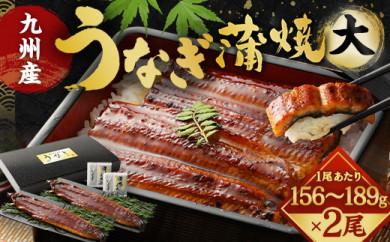 FY01-11 九州産うなぎ蒲焼大2尾(1尾あたり156~189g)