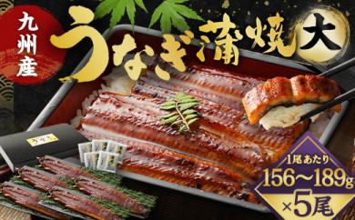 FY13-24 九州産うなぎ蒲焼大5尾(1尾あたり156~189g)