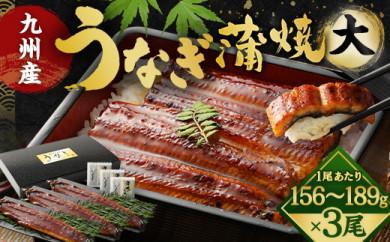 FY11-15 九州産うなぎ蒲焼大3尾(1尾あたり156~189g)