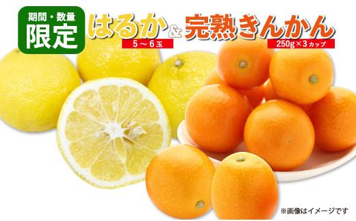 A37-20 ≪期間・数量限定≫爽やか柑橘「はるか」(5~6玉)&「完熟きんかん」(計750g)