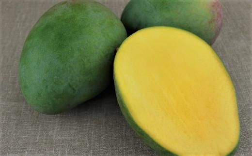 【期間限定】農家直送!トカテン農園のキーツマンゴー1.5kg