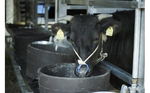 【緊急支援品・数量限定】牧場直売「淡路姫和牛」たれ漬 800g(400g×2パック)