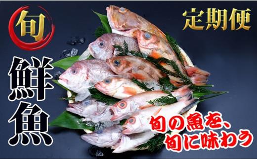 [№5685-1190]年4回!超新鮮な日本海の鮮魚(2~3人前)定期便(下処理済み 魚 詰め合わせ セット 詰合せ)
