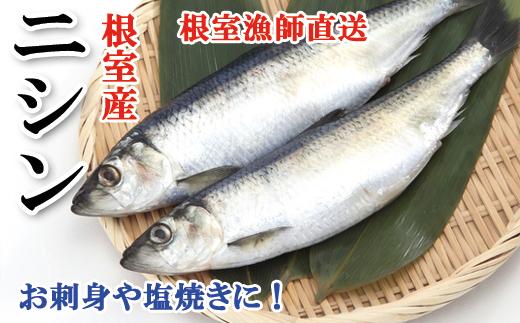 A-71031 【北海道根室産】ニシン(3本入)×4P