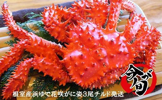 C-01024 【北海道根室産】浜ゆで花咲がに姿3尾(チルド発送)