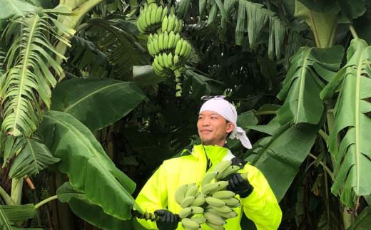 【沖縄県産】寛尚ファームのワクワクバナナ 2kg