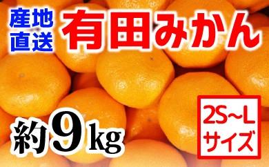 ■【産地直送】有田みかん 約9kg(2S~L)紀州グルメ市場