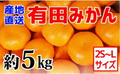 ■【産地直送】有田みかん 約5kg(2S~L)紀州グルメ市場