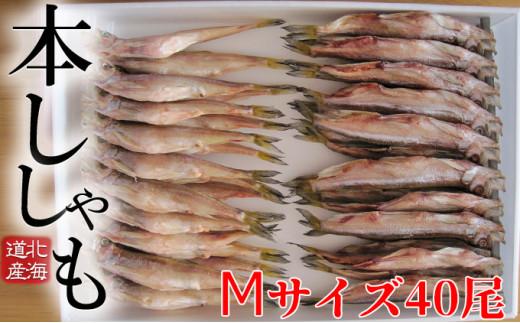 [№5779-0415]北海道産ししゃもM40尾セット