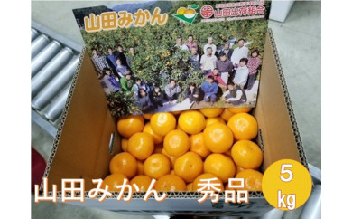 ■山田みかん 秀品5kgS/M/L