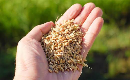収穫したてのおいしさを自然の力で保つ「もみ保管」