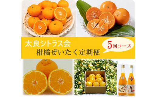 R-27 太良シトラス会 柑橘ぜいたく定期便5回コース