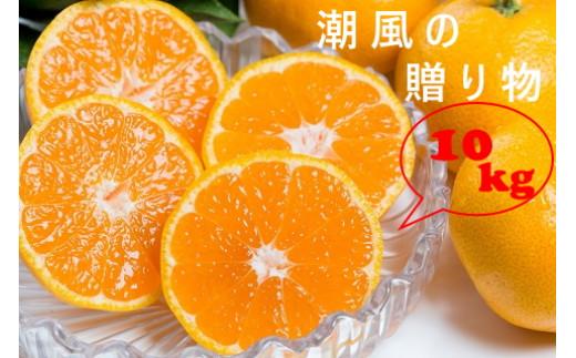 N-38 潮風の贈り物(みかん)  10kg