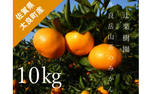 N-28 多良岳山系のみかん 10kg