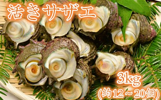 【生産者支援】活きサザエ3kg(12~20個)
