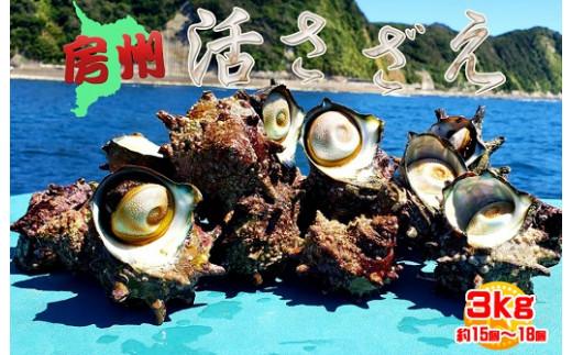 【房州産】素潜り漁で採取した房州活きさざえ 3kg(約15個~18個)