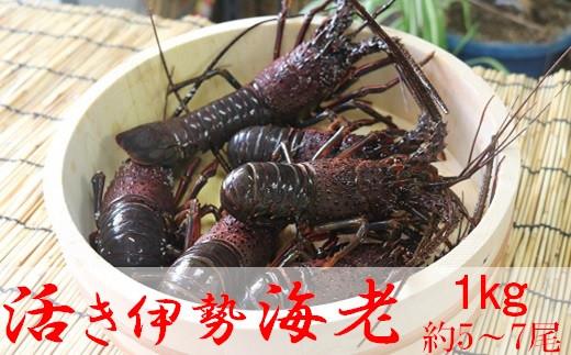 鴨川産活き伊勢海老800g(約5~7尾)