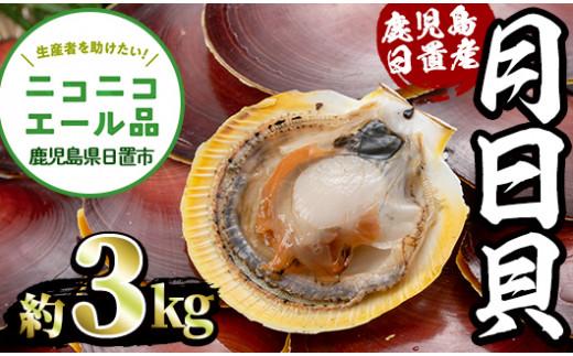 鹿児島県日置市の吹上浜の月日貝(約3kg)【江口漁業協同組合】
