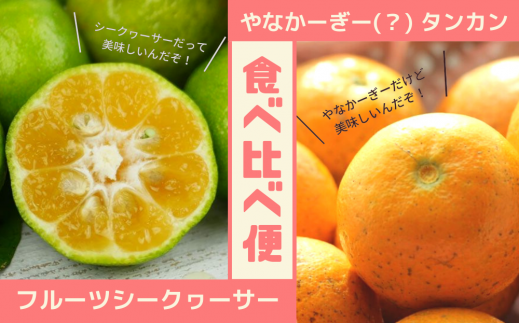 タンカン&シークヮーサー食べ比べ便(計10キロ)【2020年12月発送】