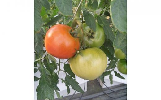 [№5229-0157]田口農園のトマト詰め合わせ(計約2.4kg)