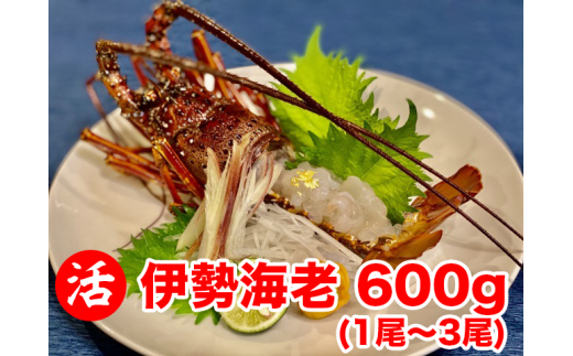 【職人吉岡】活!職人吉岡の伊勢海老600g!!(1尾から3尾)