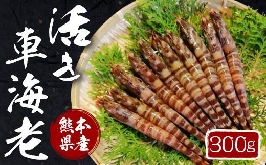 熊本県産 活き 車海老 300g(10~15尾程度)エビ えび 活き海老