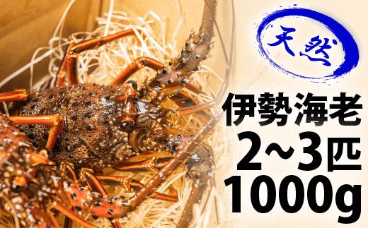 Dns-03 漁港直送!四万十町産の天然伊勢海老2~3匹(1000g)
