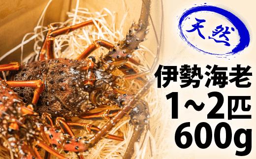 Dns-02 漁港直送!四万十町産の天然伊勢海老1~2匹(600g)