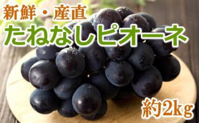【先行予約】[新鮮・産直]有田巨峰村の朝採りたねなしピオーネ 約2kg