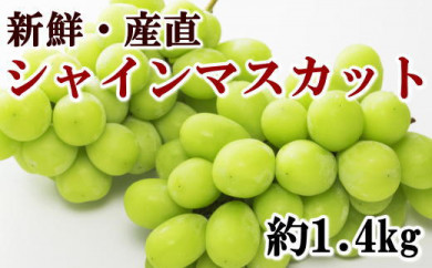 【先行予約】[厳選・産直]有田巨峰村の朝採りシャインマスカット 約1.4kg