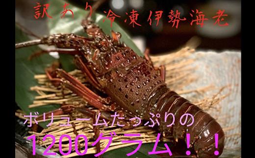 UM032【訳あり】冷凍伊勢海老【1.2kg】