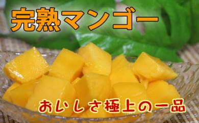 南国完熟マンゴー<ご家庭用>約3kg【先行予約】