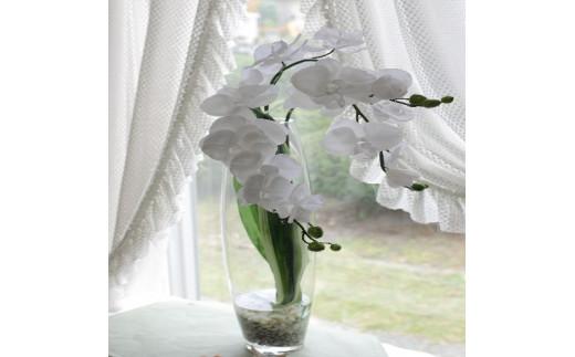 【空気をきれいにする】 水の中の胡蝶蘭