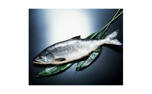北海道産新巻鮭オス(約4kg) 1尾【1112939】