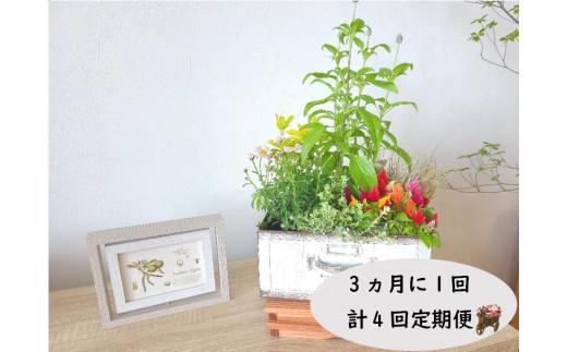 【定期便/3ヶ月に1回/計4回】季節の寄せ植え鉢