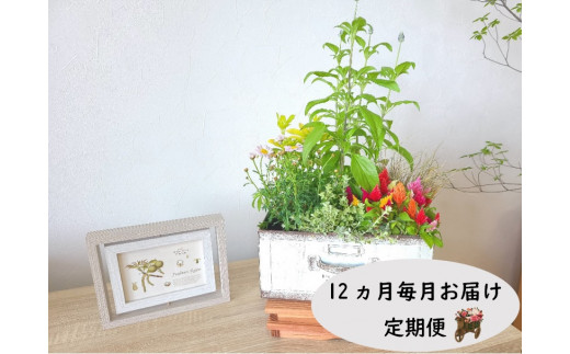 【定期便/12ヶ月】季節の寄せ鉢