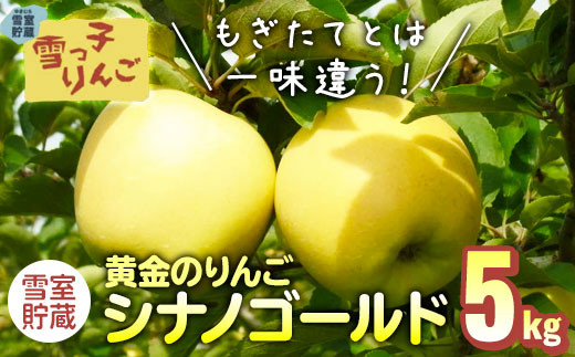 【先行予約/期間限定/2021年3月下旬~4月発送】雪っ子りんご シナノゴールド  5kg