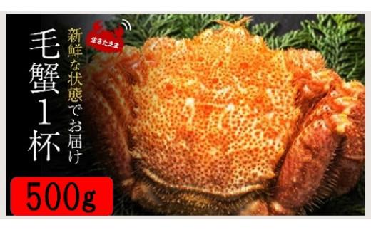 2021年2月より発送 ◆三陸産 活毛ガニ(特大) 約500g×1杯