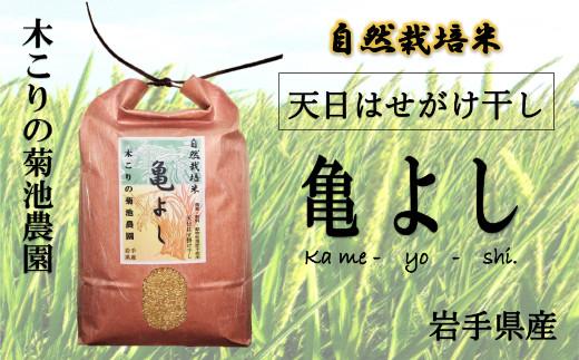 木こりの菊池農園 自然栽培米【亀の尾】(白米・玄米)5kg