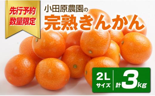 【期間・数量限定】令和3年産先行予約分 小田原農園の「完熟きんかん」2Lサイズ3kg AR-AB10
