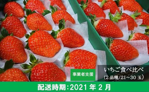 TK16-02 梶原フルーツのイチゴ食べ比べセット 2月お届け分