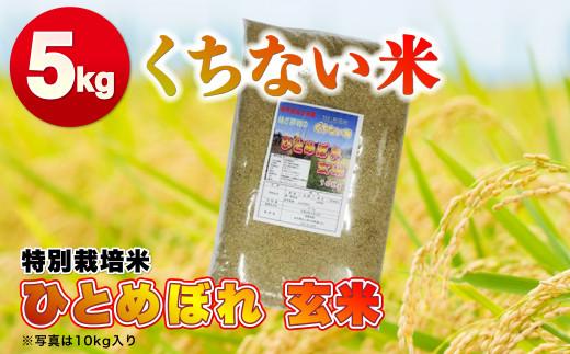 くちない米(特別栽培米ひとめぼれ 玄米)5kg