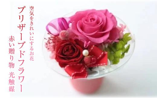 【空気をきれいにするお花】プリザーブドフラワー 赤い贈り物  光触媒