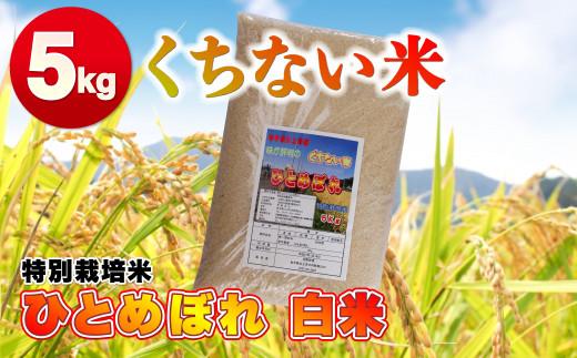 くちない米(特別栽培米ひとめぼれ白米)5kg