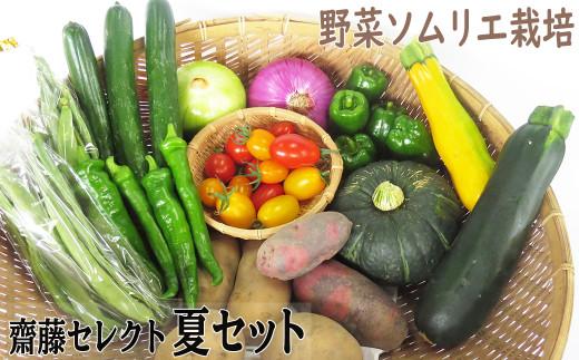 【2021/7月中旬~発送予定】野菜ソムリエ齋藤セレクト「新」夏セット