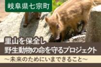 https://www.furusato-tax.jp/gcf/353